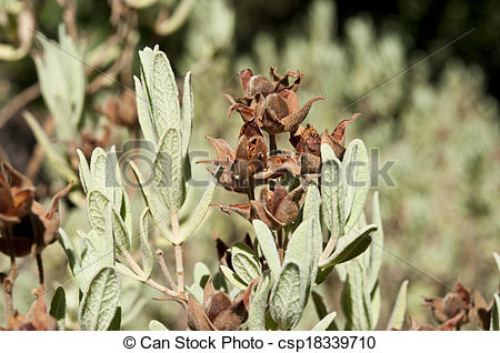 Stock Photography of Spring Rock.