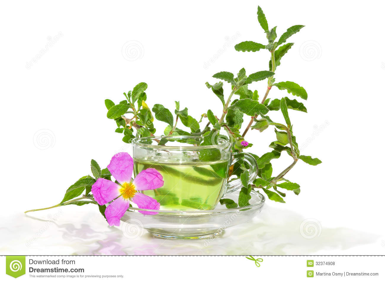 Infusion From The Rockrose Or Cistus Albidus Royalty Free Stock.