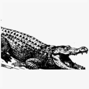 PNG Alligators Cliparts & Cartoons Free Download.