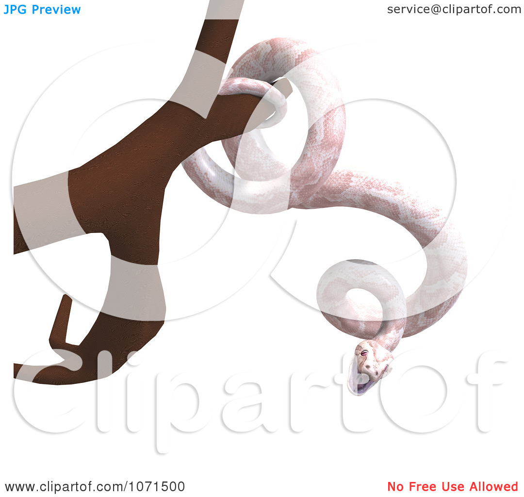 Clipart 3d White Albino Python Snake In A Tree.
