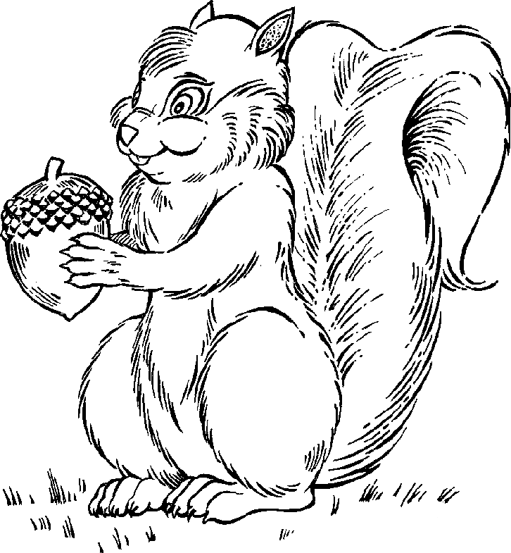 Free Black And White Squirrel Clipart, Download Free Clip.
