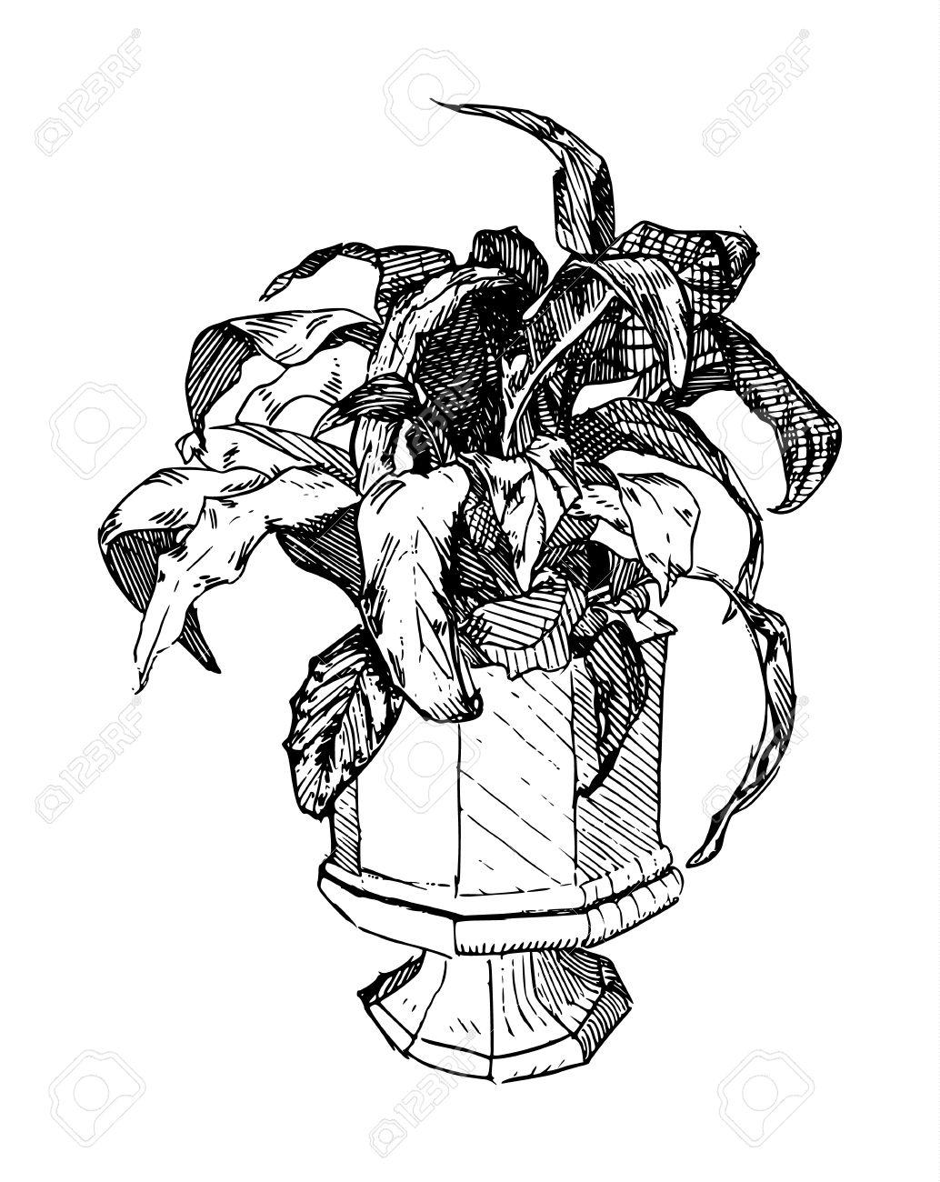 Line Art Illustration Of A Potted Plant In Albrecht Durer Style.