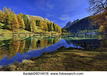 "Stock Images of ""Autumnally coloured larch trees reflected in lake."