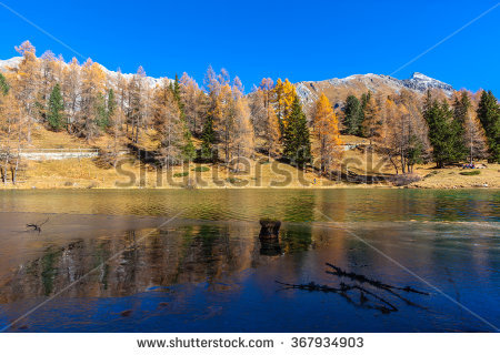 "golden_larches"" Stock Photos, Royalty."