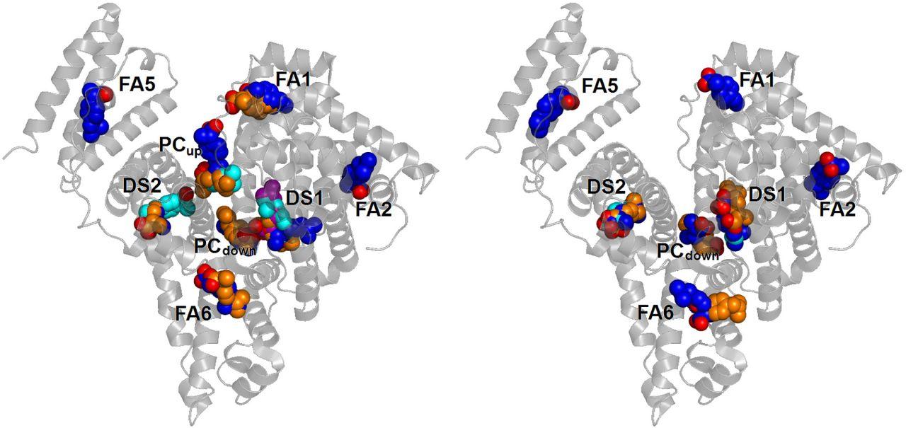Multiple binding modes of ibuprofen in human serum albumin.