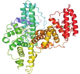 Bovine serum albumin (PDB ID: 4F5S) interaction with 5FU.