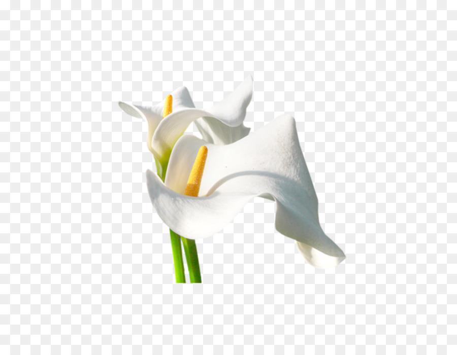 Flowers Clipart Backgroundtransparent png image & clipart free download.