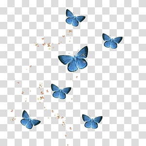 Alcon transparent background PNG cliparts free download.