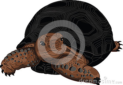 Aldabra Stock Illustrations.