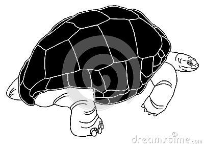 Aldabran Seychelles Giant Tortoise Stock Illustrations, Vectors.