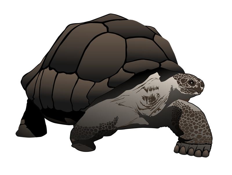 Tortoise clipart png.