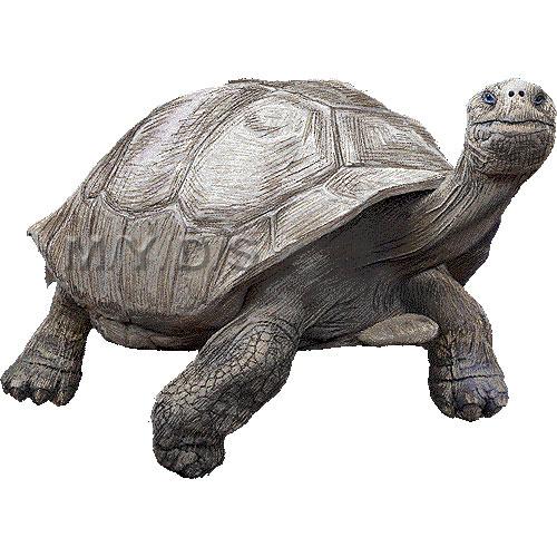 Giant tortoise clipart.