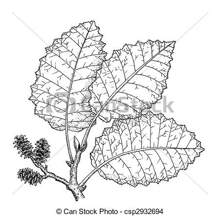 Alder Clip Art and Stock Illustrations. 360 Alder EPS.