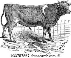Alderney Clip Art and Illustration. 68 alderney clipart vector EPS.