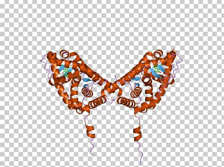 Mineralocorticoid Receptor Aldosterone Bead Potassium PNG.