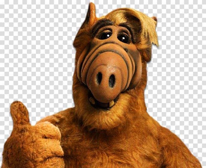 Alf 2021
