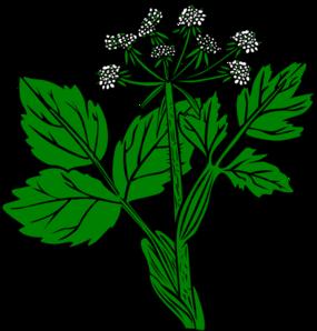 Alfalfa Clipart.