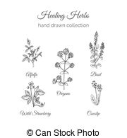 Alfalfa Illustrations and Clip Art. 66 Alfalfa royalty free.