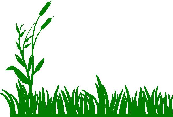 Algae 20clipart.