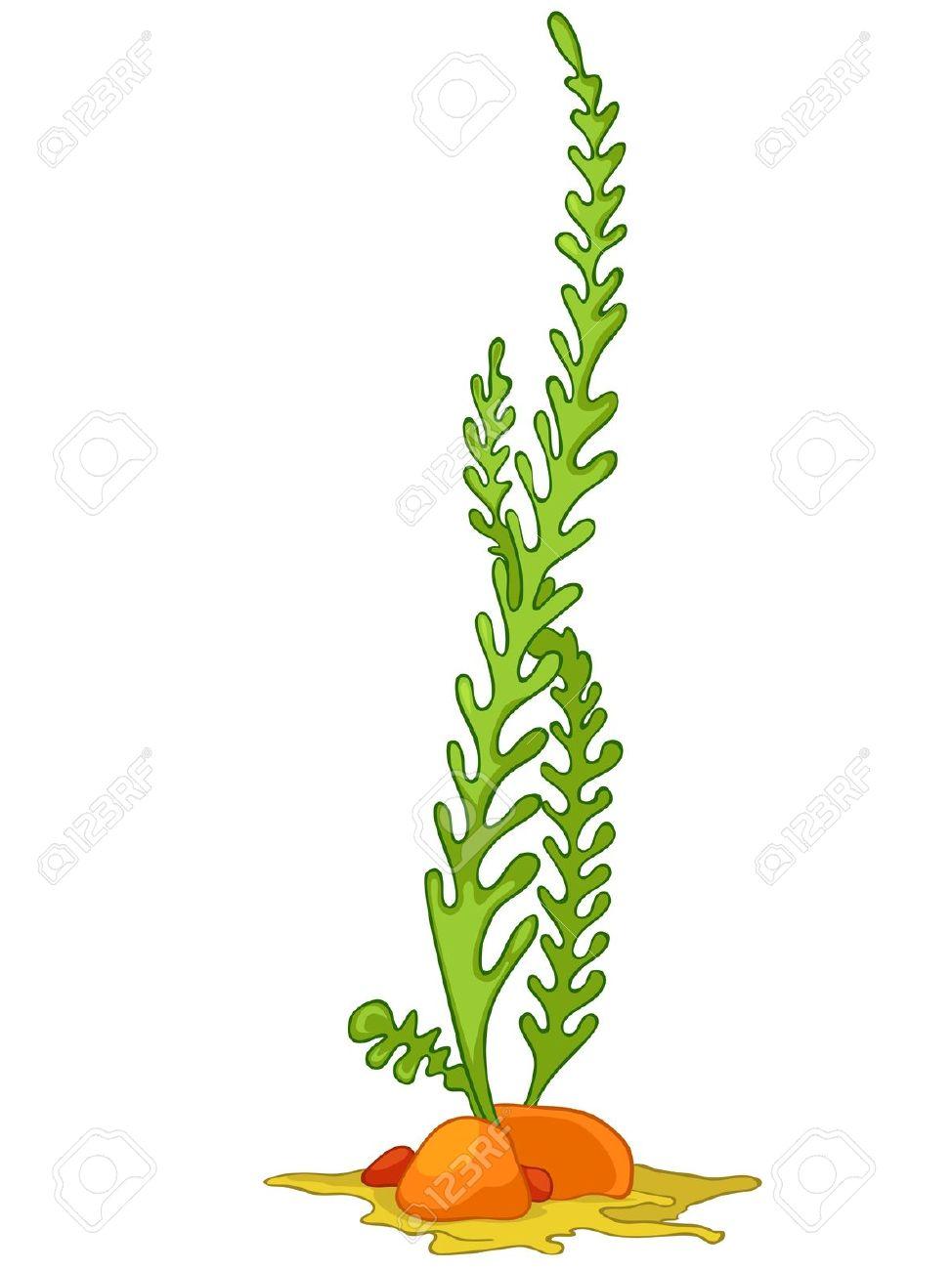 Free Clipart Algae.