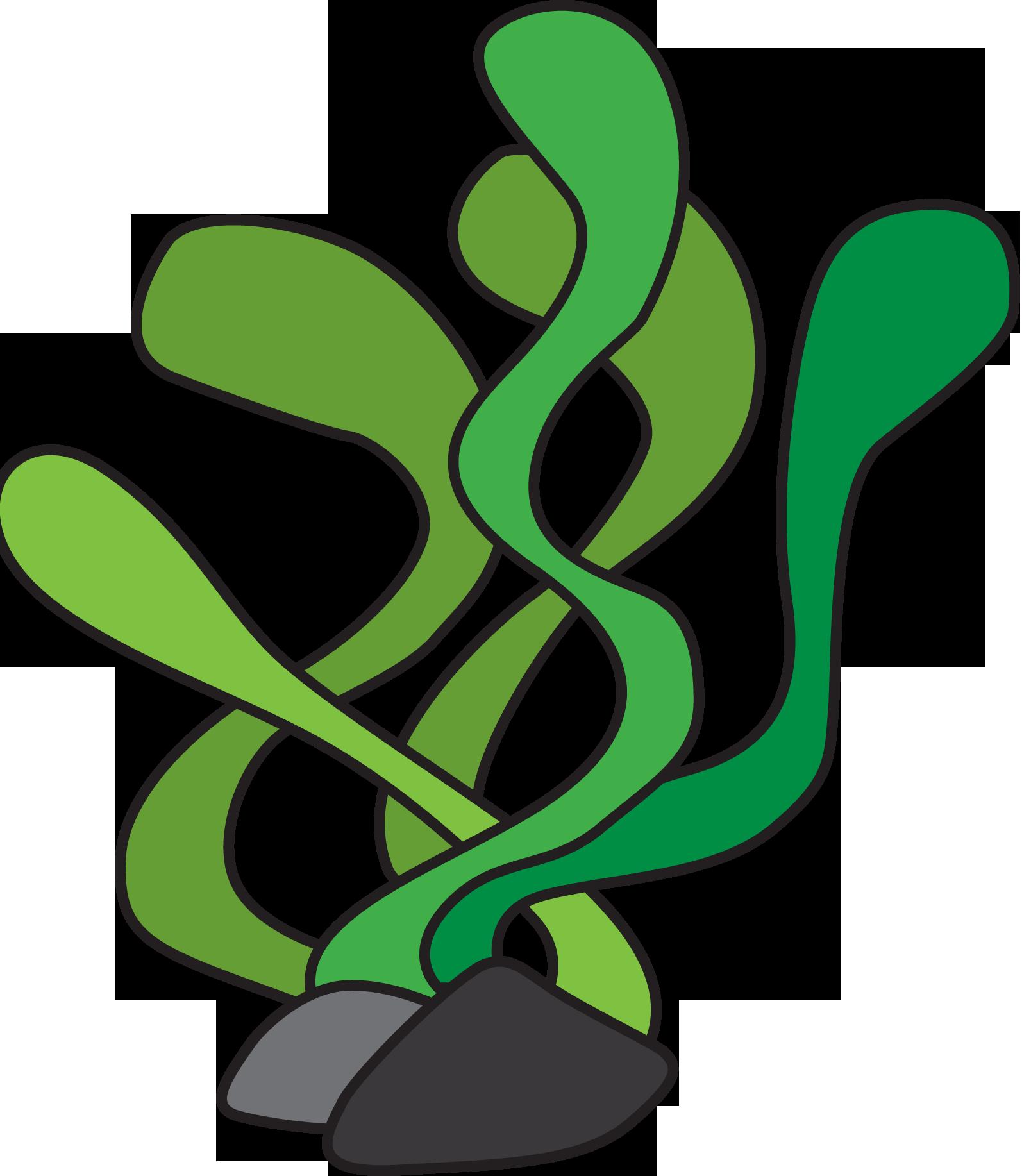 Algae plant clipart.