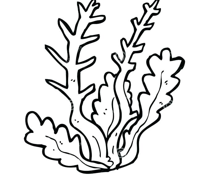 Algae clipart outline, Picture #40332 algae clipart outline.