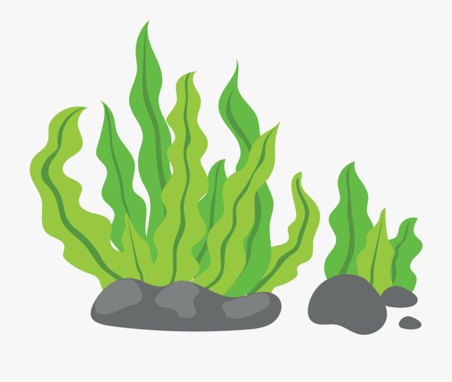 Algae Sea Grass.