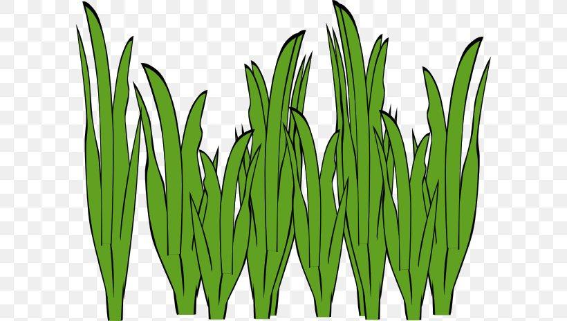 Seaweed Algae Ocean Clip Art, PNG, 600x464px, Seaweed, Algae.