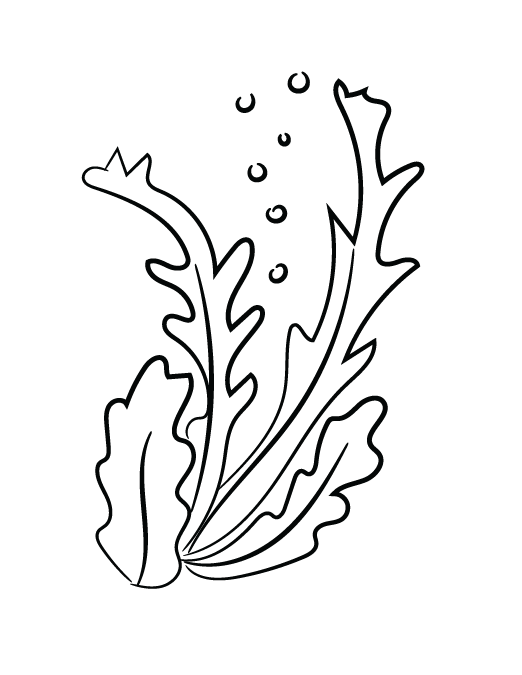 Algae clipart sketch, Algae sketch Transparent FREE for.