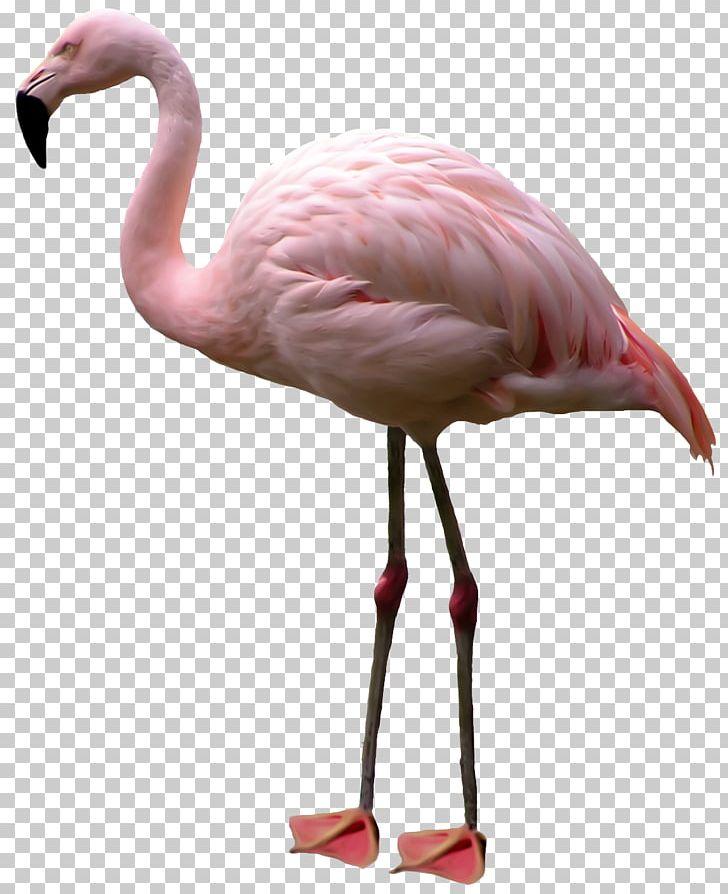 Flamingo PNG, Clipart, Alice In Wonderland, Animals, Beak.