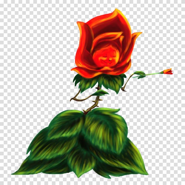 Garden roses Centifolia roses Alice\\\'s Adventures in.