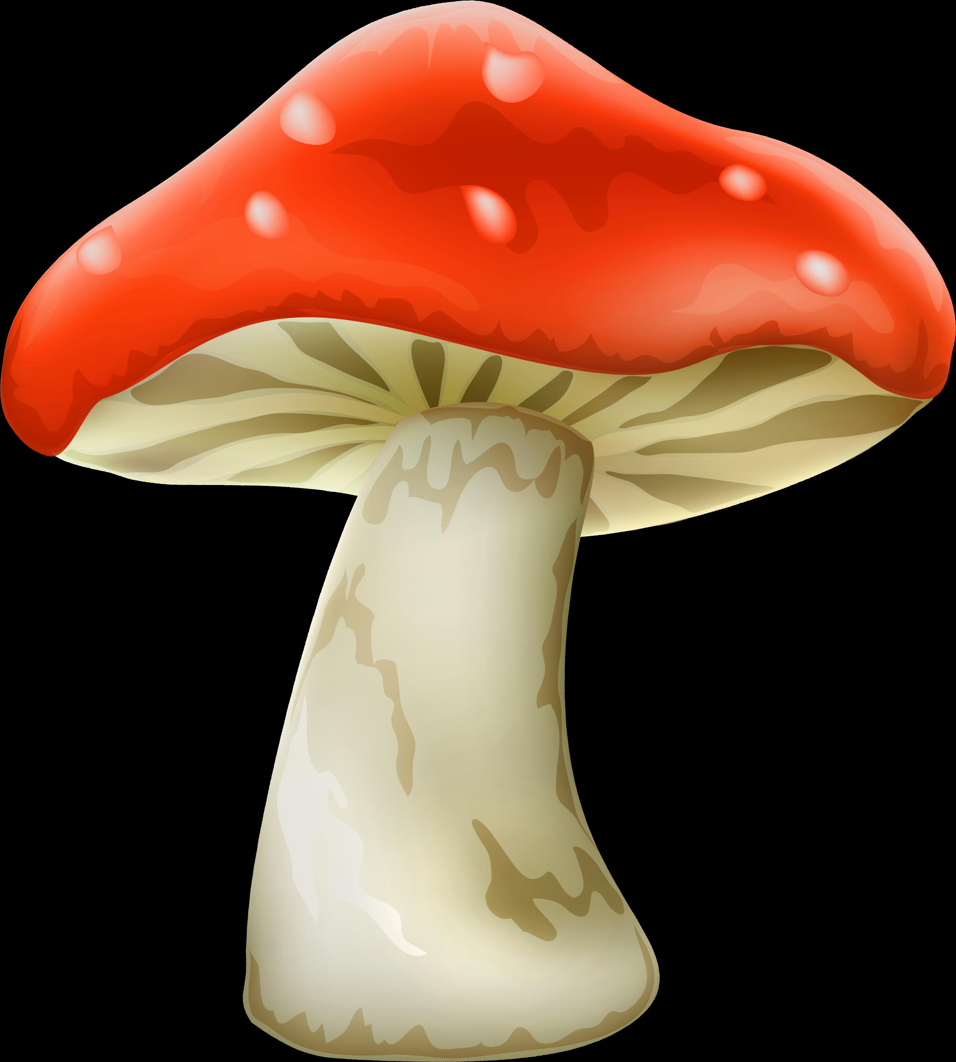 Mushroom Vector Alice In Wonderland.