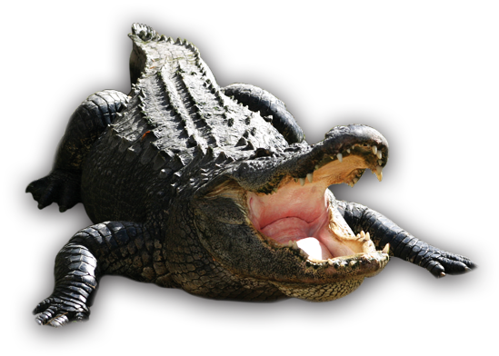 Alligator PNG Images Transparent Free Download.