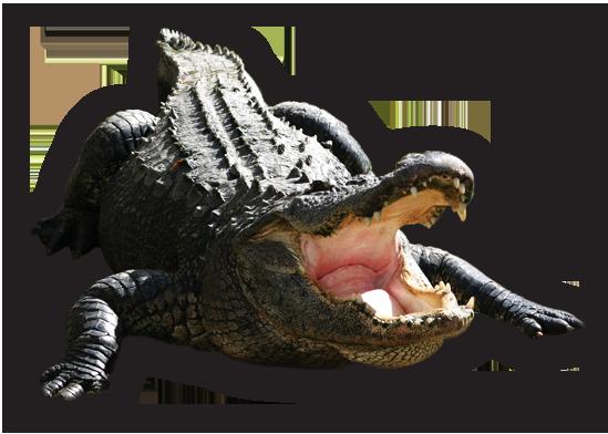 Alligator PNG Images Transparent Free Download.
