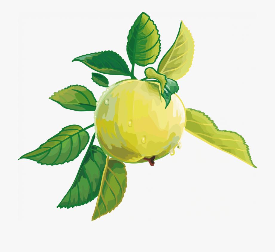 Render Fruit Vector Pomme Fruitsl Gumes Aliments Png.