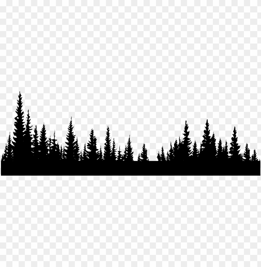 forest png image.