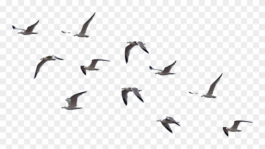 Download Free png Flying Crows Clipart.