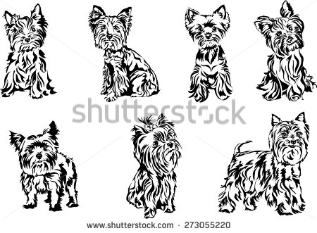 yorkshire terrier silhouette.