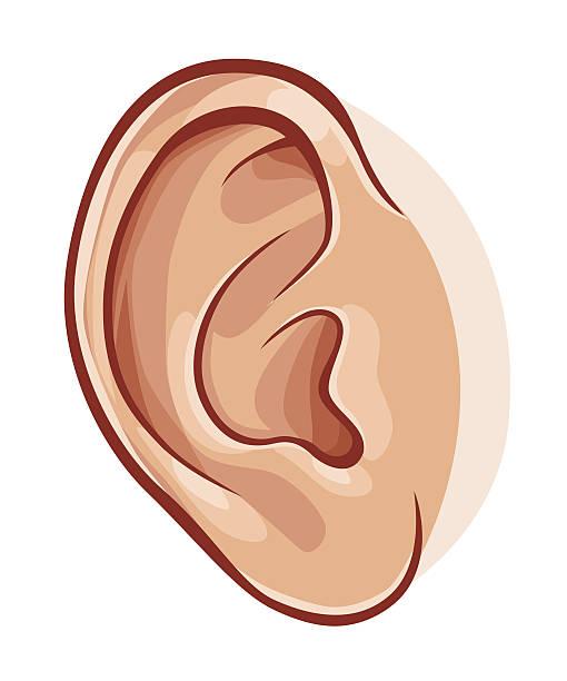 Best Human Ear Illustrations, Royalty.