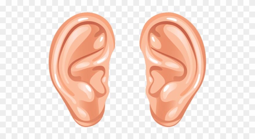 Ear Png Transparent Images.