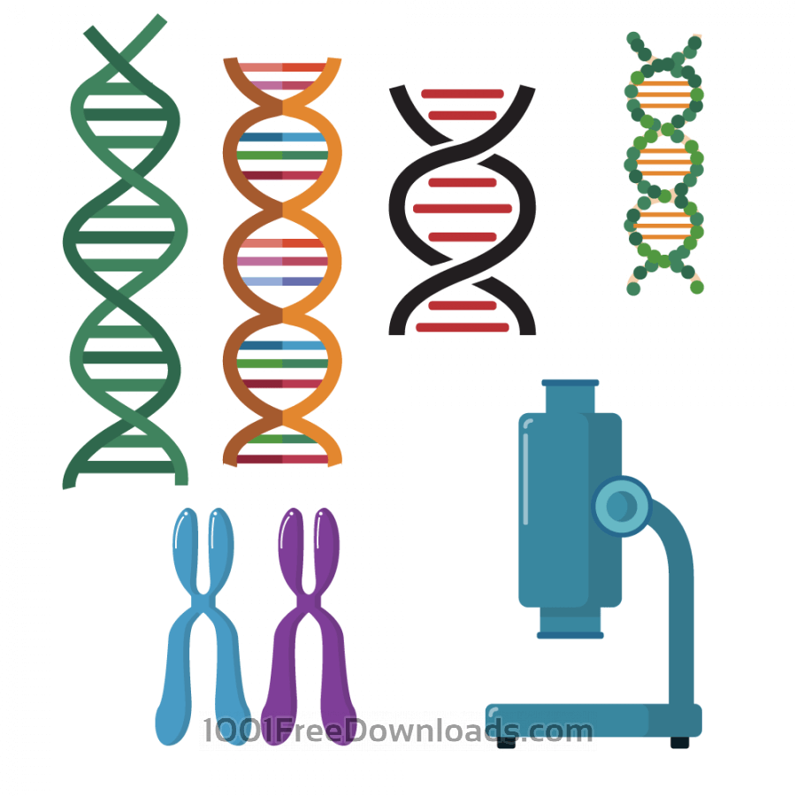 Free Vectors: DNA double helix scientific vector set.