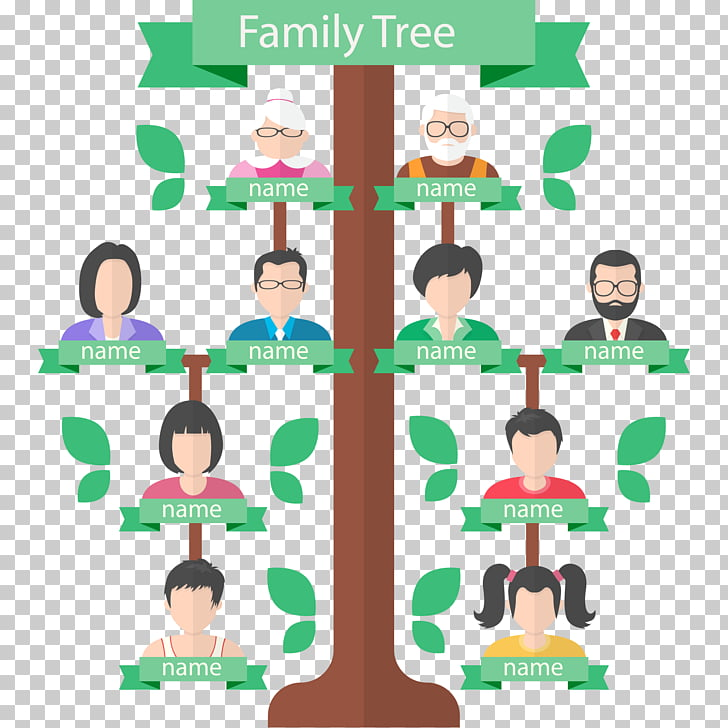 Family tree Genealogy Generation, family tree, illustration.