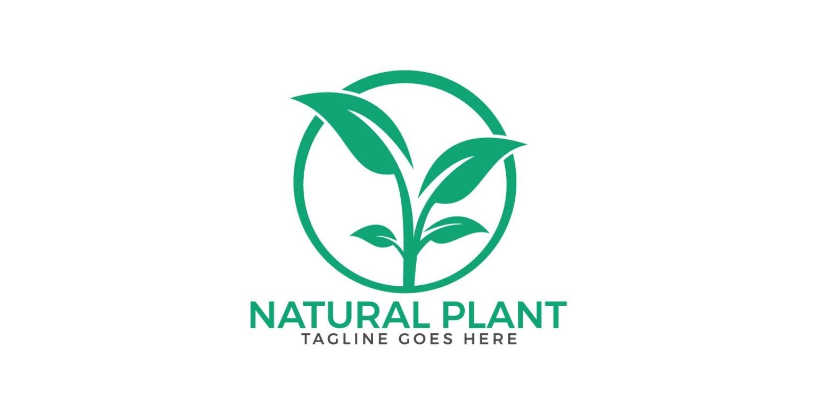 Natural Plant Logo Design.