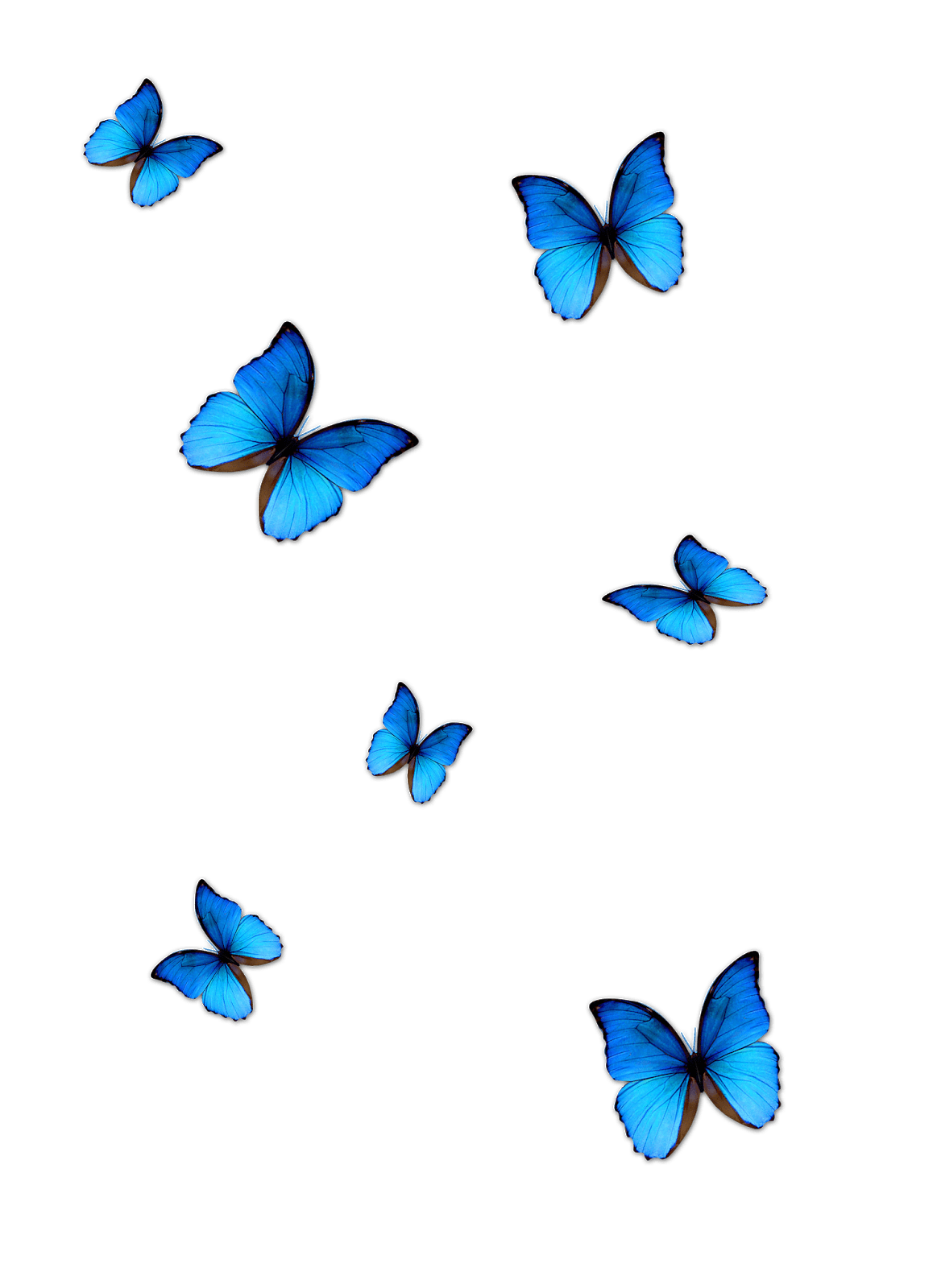 Lightroom Butterfly Effect Editing Butterfly Png Download.