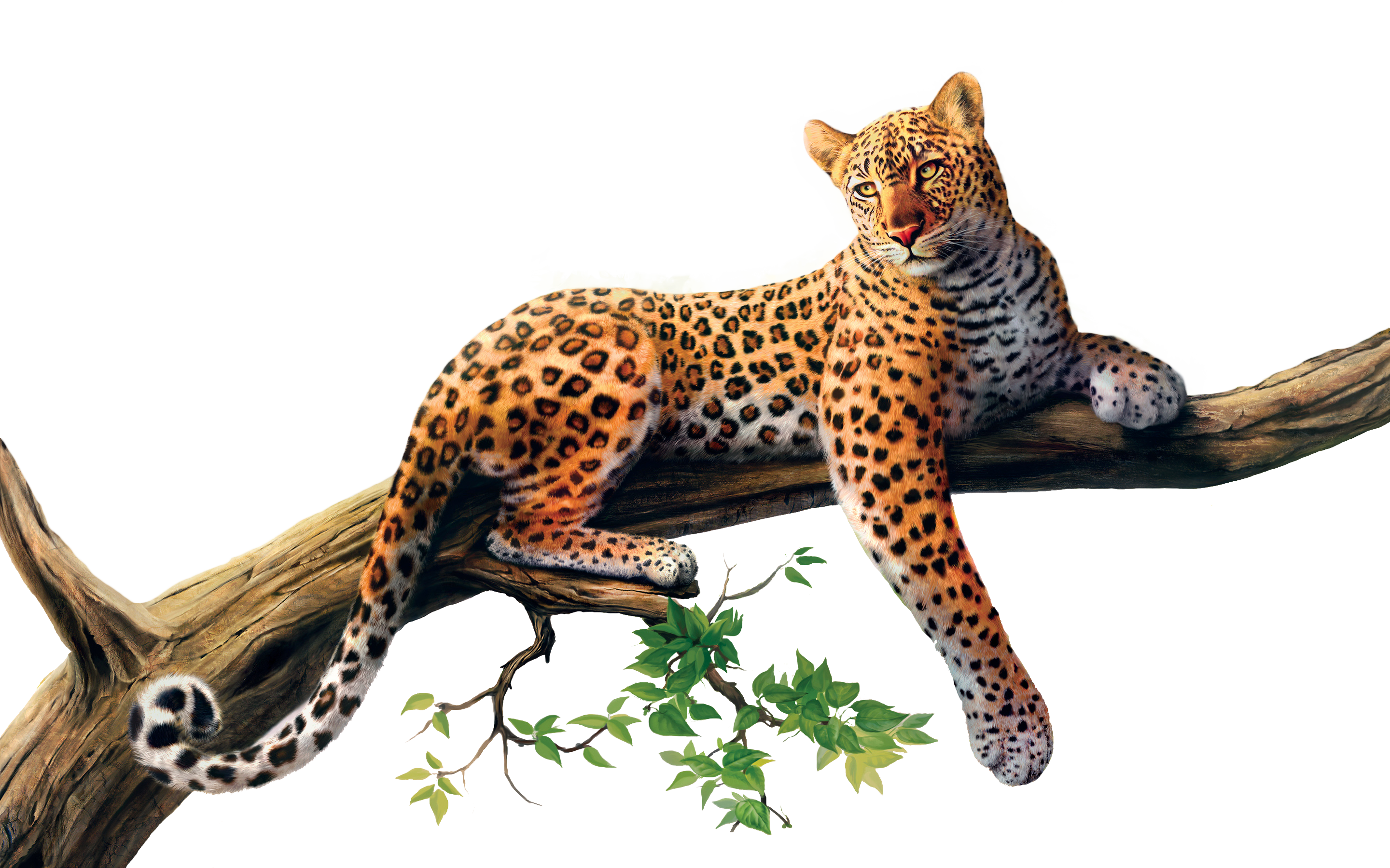 Download Jaguar PNG Picture.