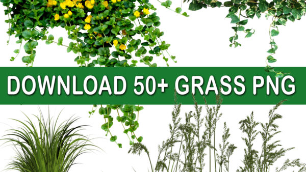 grass png zip download.