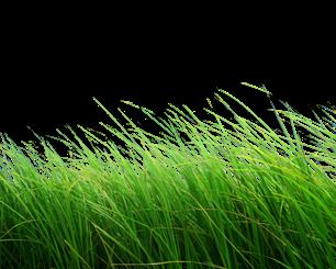 Grass png zip file download,Grass Png,Picsartallpng.com.