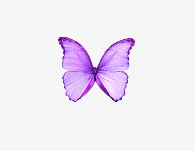 Dream Purple Butterfly PNG, Clipart, Animal, Butterfly.