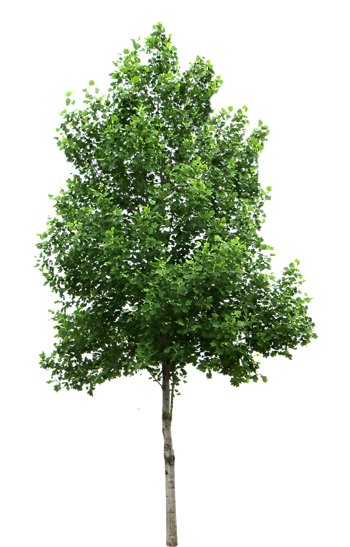 PNG Tree Images, Small, Leaf, Cartoon Trees.