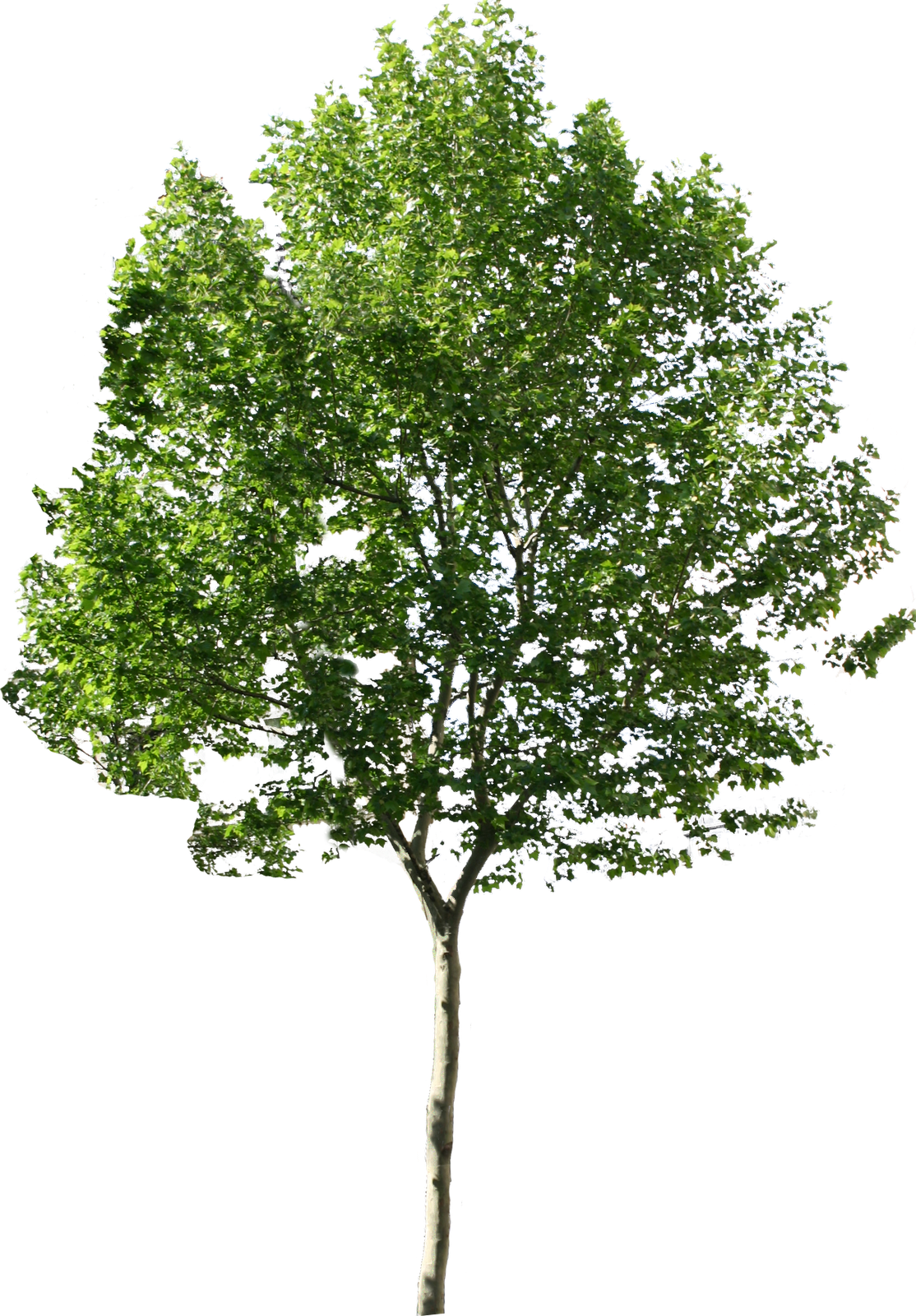 Tree PNG Images Quality Transparent Pictures.